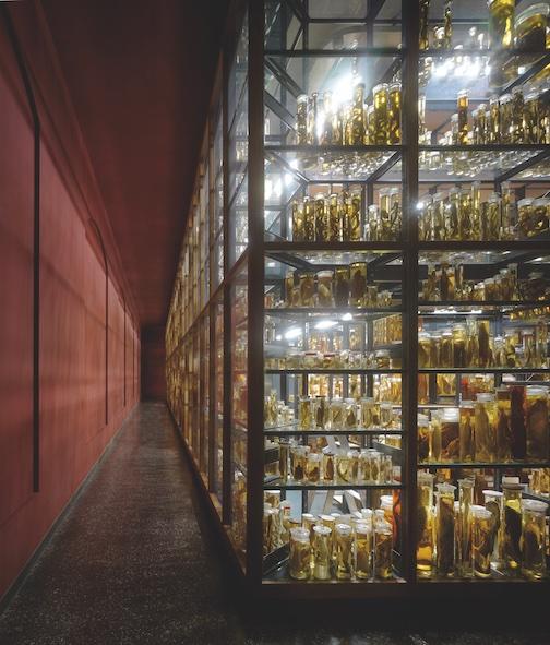 Preisträger 2012: Naturkundemuseum (Foto: Christian Richters)